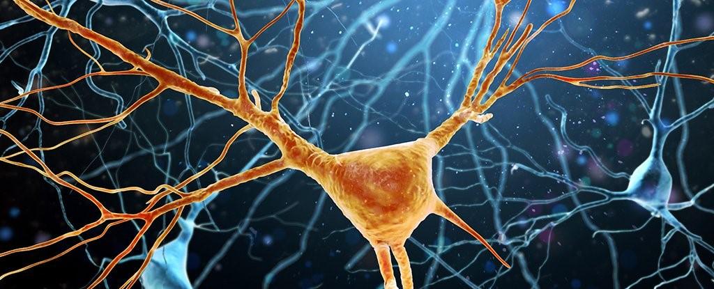 تفاوت سلول های مغز انسان می تواند باعث تفاوت در سطح هوش شود