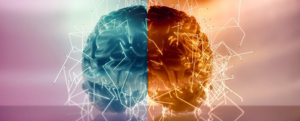 چگونگی کنترل قسمت های مختلف بدن توسط نیمکره چپ و راست مغز