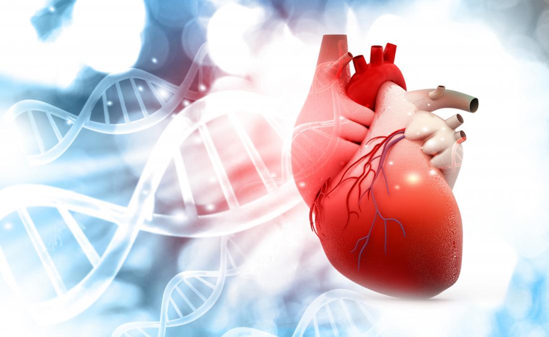 کشف مولکول جدید که نارسایی قلب را درمان می کند