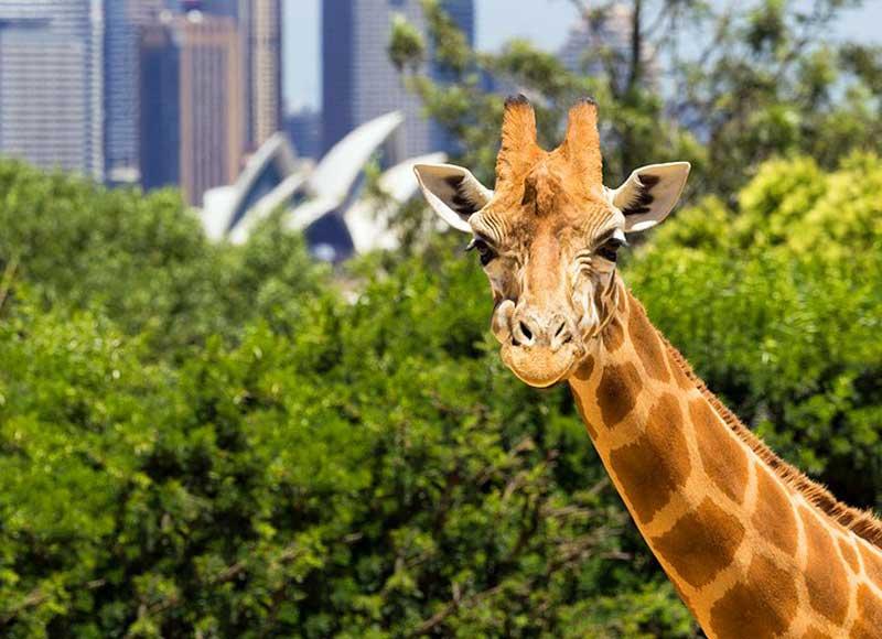نمایی از باغوحش تارونگا