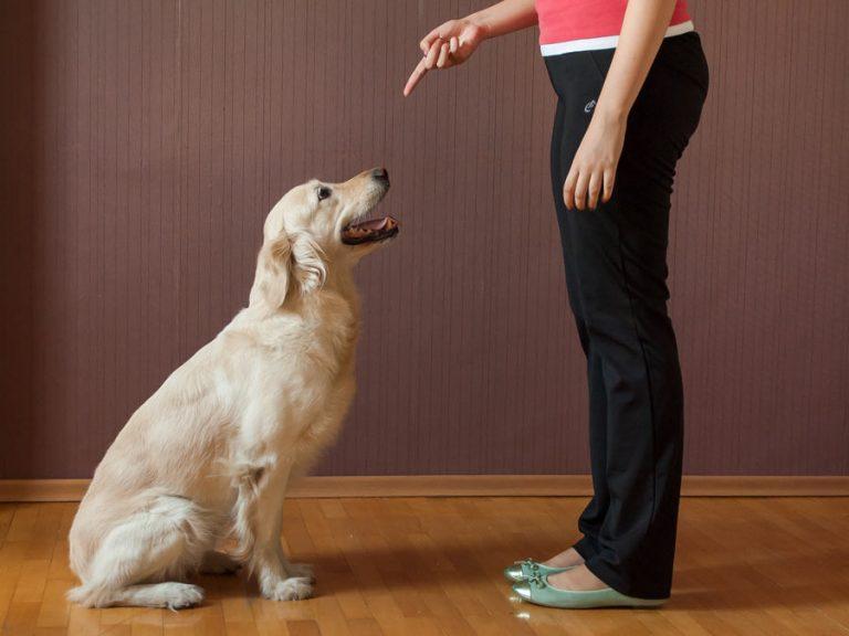 ۱۰ آموزشی که می توانید به سگتان بدهید