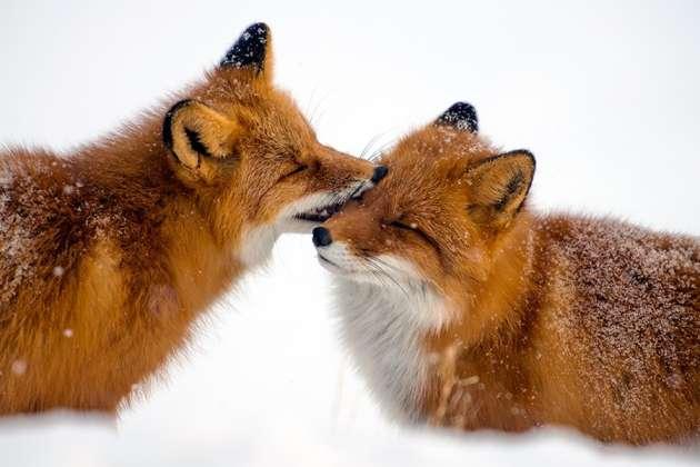 آیا حیوانات هم عاشق می شوند ؟