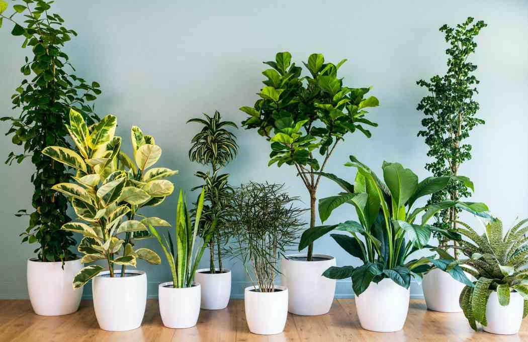 نکاتی مهم برای نگهداری از  گل و گیاه
