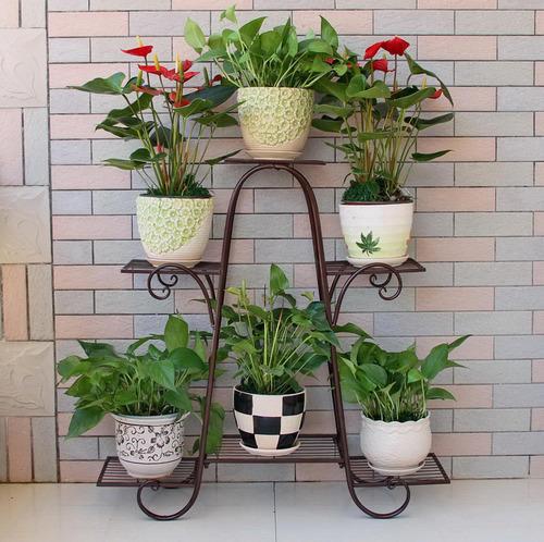 10 گیاه آپارتمانی همیشه سبز (2)