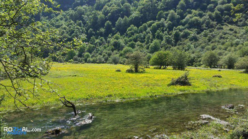 جنگل دو هزار تنکابن : جنگلی بکر و مه آلود