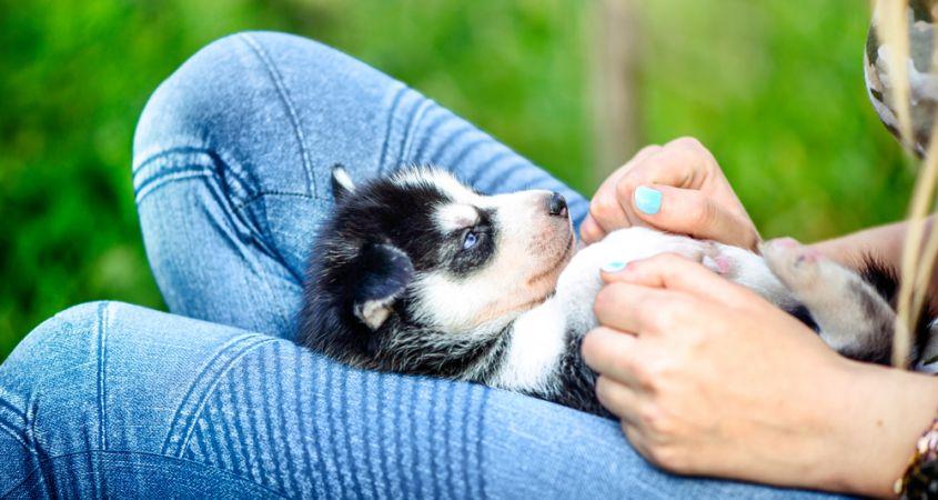 حمل سگ با خودرو غیرقانونی است !! | برخورد پلیس با سگگردانان در معابر عمومی